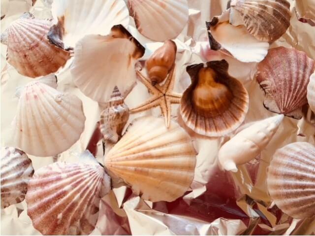貝カルシウム