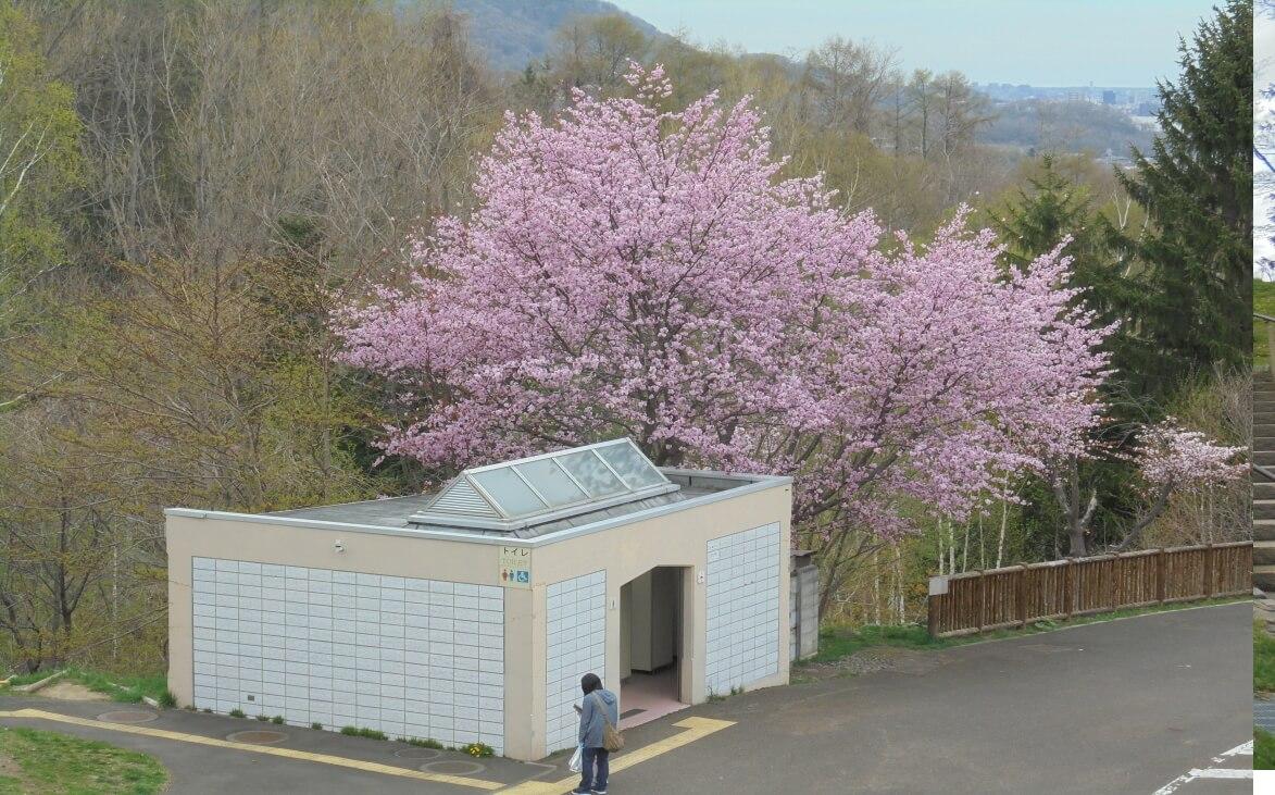 旭山記念公園トイレ