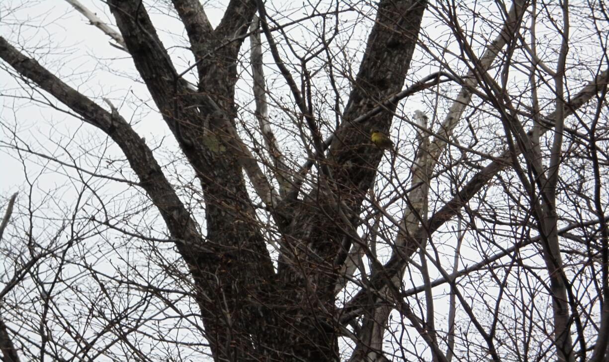 藻岩山の野鳥