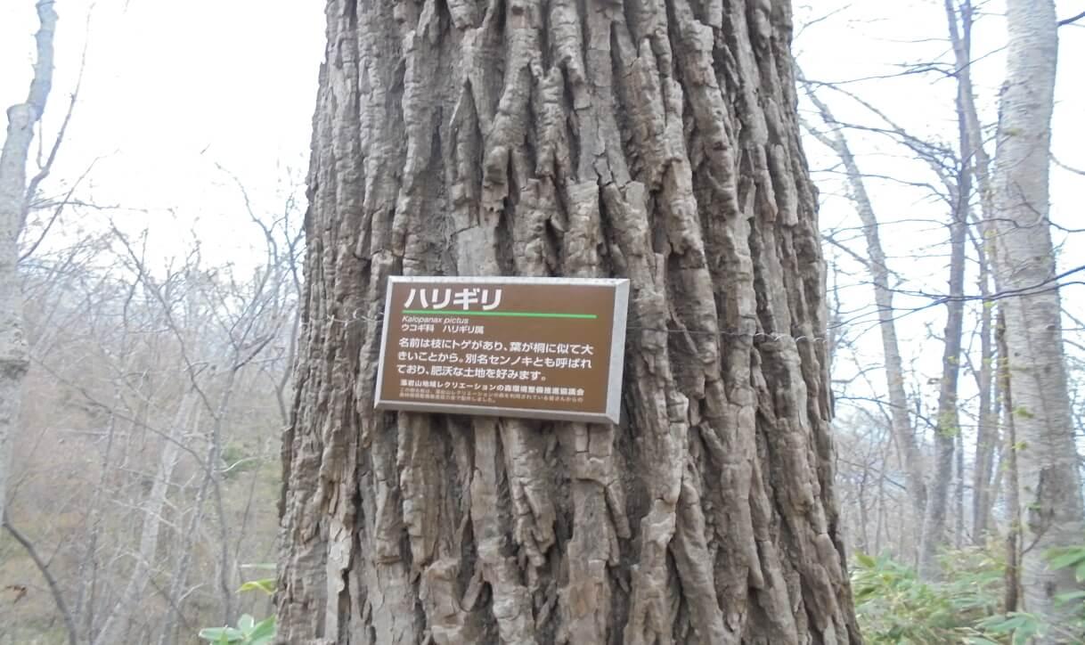 藻岩山の樹木